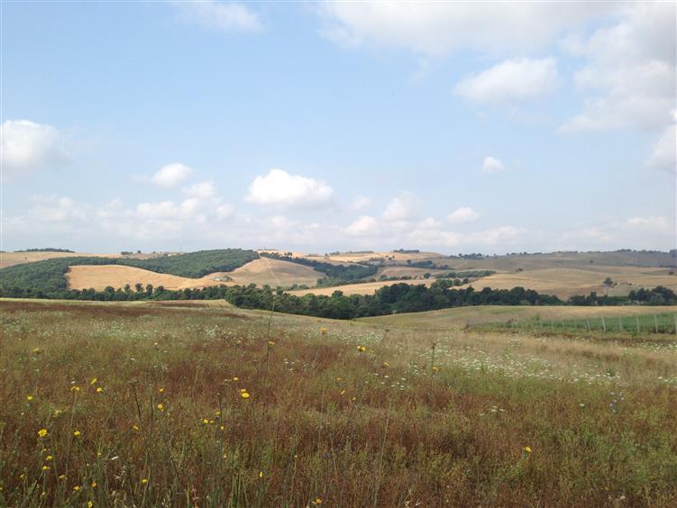 Vende terreno agricolo a Tuscania Rif. 5075434