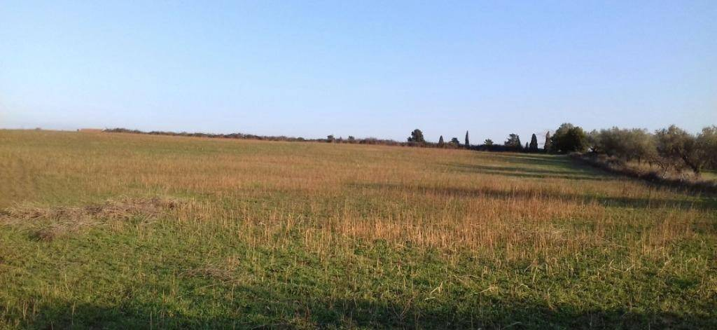 Vendo terreno agricolo a Tuscania Rif. 5090518