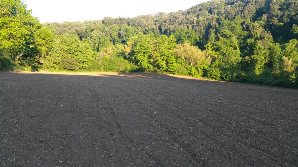 Vendo terreno agricolo a Tuscania Rif. 5090525