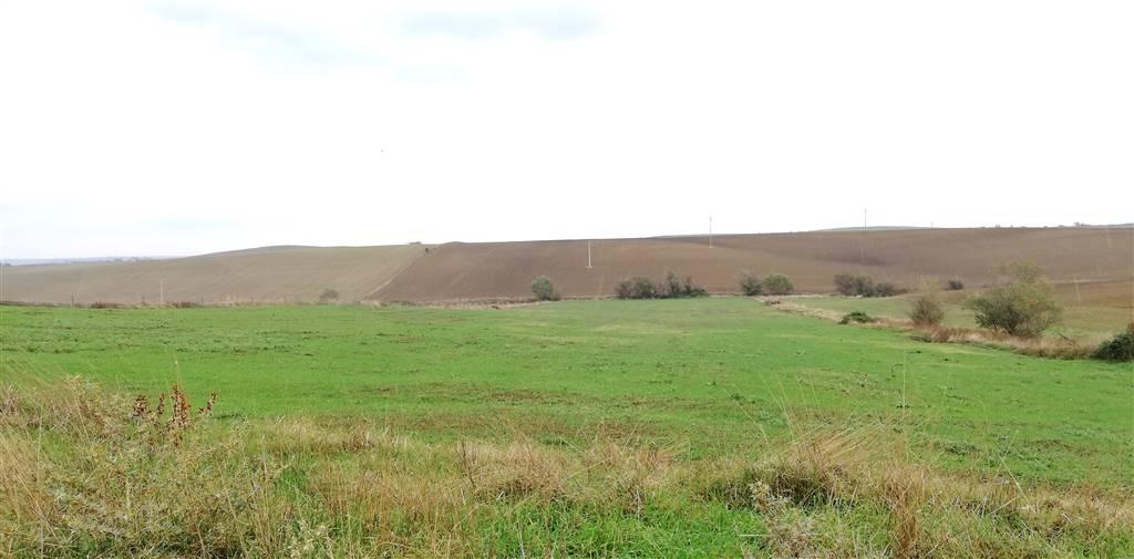 Terreno Agricolo in vendita a Tuscania Rif. 8389790