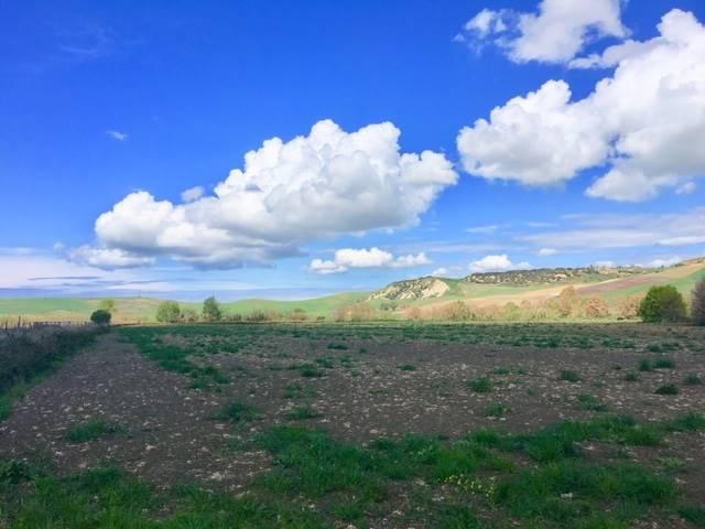 Terreno Agricolo in vendita a Tarquinia Rif. 10034461